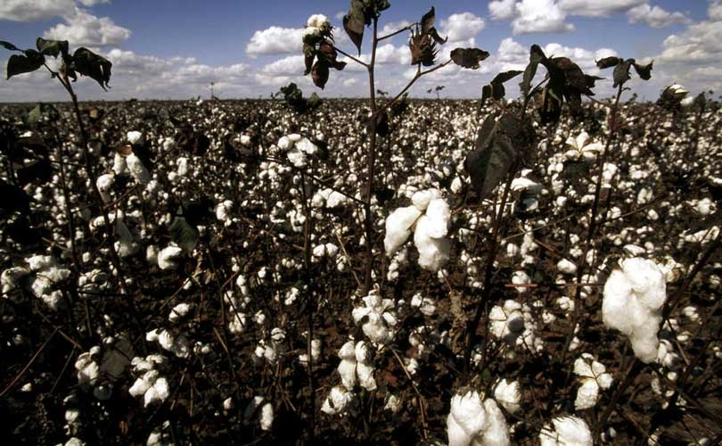 """""""Sourcing more sustainable cotton is the best way forward"""""""